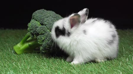 ブロッコリー : cute spotted rabbit eating broccoli 動画素材