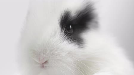 морда : close up rabbit on white background