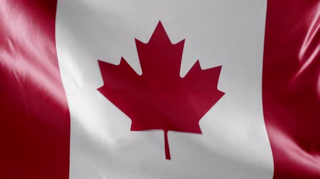 canadian maple leaf : national canadian flag with copy space Stock Footage