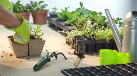 watering can : cropped view of gardener in gloves planting green sprout and filling cardboard container with soil Stock Footage