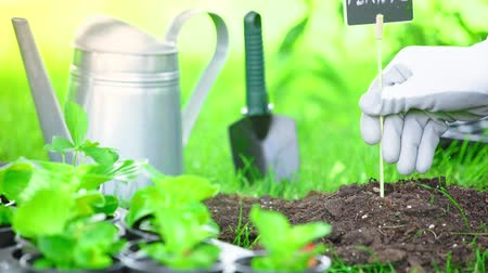 watering can : partial view of gardener in glove stucking nameplate with inscription in ground in garden Stock Footage