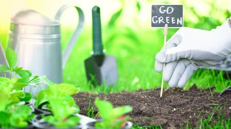 can : partial view of gardener in glove stucking nameplate with inscription in ground in garden Stock Footage