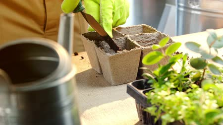 watering can : partial view of gardener filling cardboard containers with soil