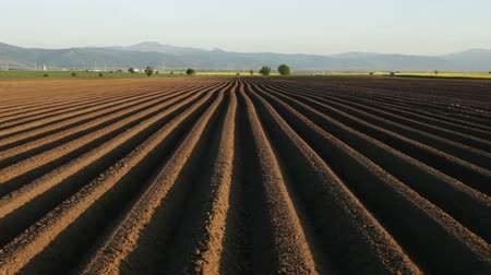 sow : Potato field in spring - camera tilting up and moves along sowing rows on farmland Stock Footage