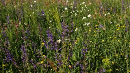 változatos : Biodiversity on a spring meadow - many type of wild flowers blooming, ecology concept, closeup