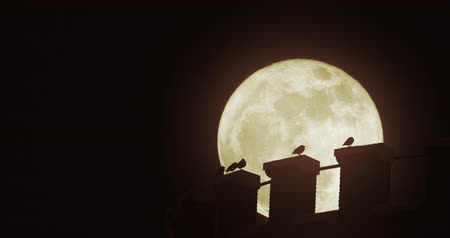 corvo : Birds on the edge of a water tower under a super moon. Highly cinematic shot suitable for establishing many different kinds of residential areas at night.