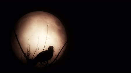 meia noite : Bird silhouette against a large full moon. 4K. Vídeos