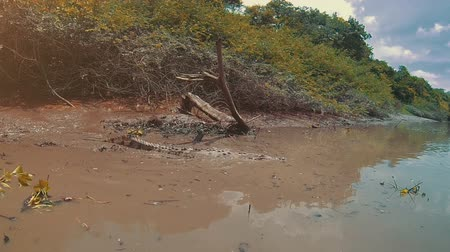 hlad : Wild crocodile filmed on a boat touring a Costa Rica river.