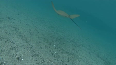 bezmotorové létání : The camera follows a large stingray in the ocean. Dostupné videozáznamy