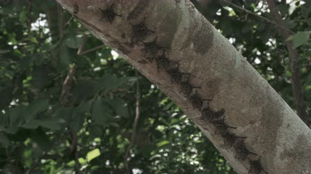 alado : Wild bats visible underneath a tree branch along a Costa Rica river.