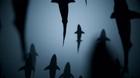 remek : 4K Shark Silhouettes Passing Overhead. Realistic CGI animation.