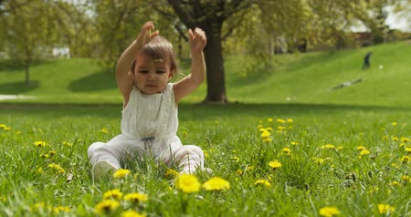 parky : Cute baby girl playing with grass in park. Shot in 4K RAW on a cinema camera. Dostupné videozáznamy