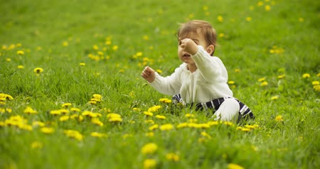 dmuchawiec : Cute baby girl playing with dandelions in the park. Shot in 4K RAW.