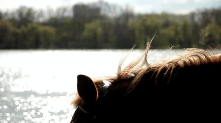 bay horse on the background of the river, closeup