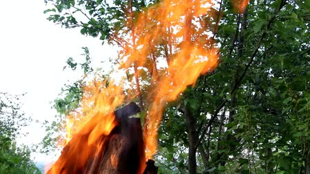 greenpeace : bright flame against the background of a green tree Stock Footage