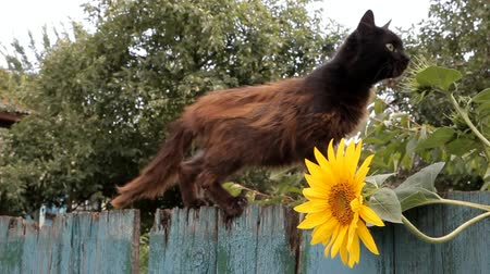 shabby : brown, thin skinny cat climbs the old fence