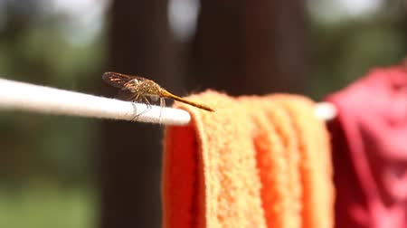 corda : dragonfly sitting on a rope
