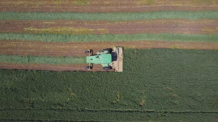 préri : Combine harvester in a green field - Top down Aerial footage