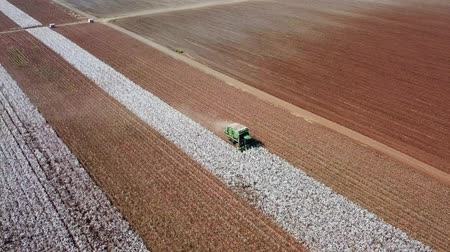 reszelt : Aerial view of a Large green Cotton picker working in a field.