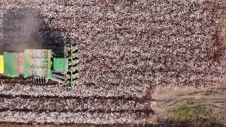 bavlna : Aerial view of a Large green Cotton picker working in a field.