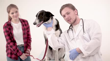 latinamerican : Handsome vet standing at dog and posing on camera. Dog owner standing nearby.
