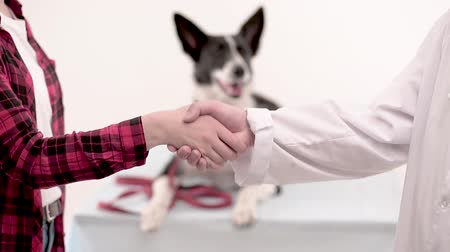 latinamerican : Close up of vet and dog owner hand shaking after successful examining. Pet care concept.