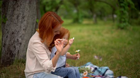 camomille : Beautiful Mother Sits On The Blanket In The Park With Her Small Daughter. Redheaded Girl Enthusiastically Plays With A Wild Flower While Sitting On Mothers Laps. Vidéos Libres De Droits