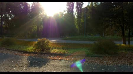 teszi : Sportive Brunette Man Do Morning Fitness in Beautiful Autumn Park. Healthy Lifestyle. Sunbeams on Camera Stock mozgókép