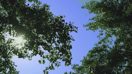 aşağıda : Tree Crowns Across Blue Sky. Wind Blows and Tree Palms are Shaking. Stok Video