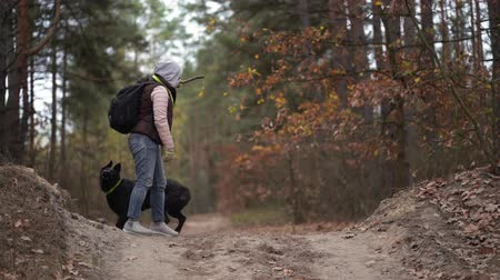 bengala : Female In Casual Clothes Carrying A Rucksack On His Back Is Playing With Her Active Shepherd Dog. The Woman Is Holding A Stick In Her Hand And The Dog Jumps Trying To Catch It. Stock Footage