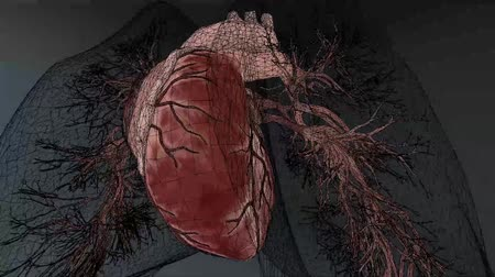 coronary : anatomical model of heart beat with different effects Stock Footage
