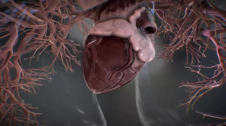 akciğer : anatomical model of heart beat with different effects Stok Video