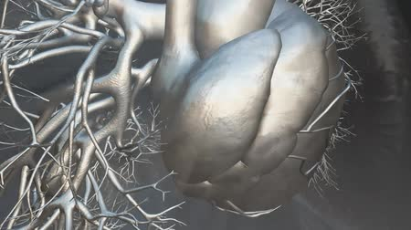 pŁuca : anatomical model of heart beat with different effects Wideo