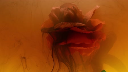 ink flower : color abstract stains of ink in the water Stock Footage