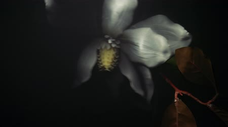 mosogató : white flower under water, white flower under water, crumpled dead flower