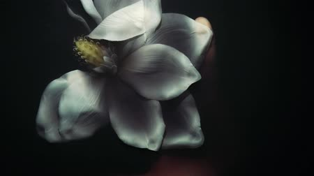 crumpled flower : white flower under water, white flower under water, crumpled dead flower