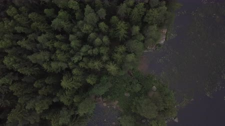 dead tree : Aerial survey epic forest panoramas in Vyborg, Mon Repos park. Monrepos north epic coniferous forest panoramas footage. Top down view of rocky island. aerial video coniferous tree