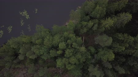 monção : Aerial survey epic forest panoramas in Vyborg, Mon Repos park. Monrepos north epic coniferous forest panoramas footage. Top down view of rocky island. aerial video coniferous tree