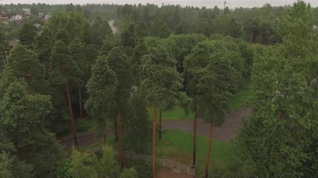 thick : Aerial survey epic forest panoramas in Vyborg, Mon Repos park. Monrepos north epic coniferous forest panoramas footage. Top down view of rocky island. aerial video coniferous tree