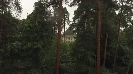 dánia : Aerial survey epic forest panoramas in Vyborg, Mon Repos park. Monrepos north epic coniferous forest panoramas footage. Top down view of rocky island. aerial video coniferous tree