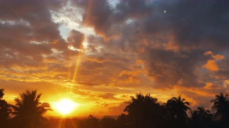 light rays : time lapse sunset, sunrise in jungle, silhouettes of palm, bright cirrus clouds Stock Footage