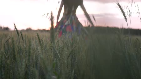 Rear view of young carefree woman in a multi-colored dress walking in through field touching with hand wheat ears, enjoying freedom and calmness on rural nature in summer.