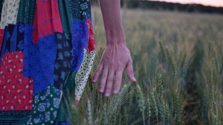 weglopen : Close-up of womans hand running through wheat field, dolly shot. Girls hand touching wheat ears closeup.