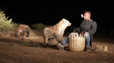 dravý : ETHIOPIA, HARAR-CIRCA DECEMBER 2017 - unidentified tourist feeding the hyena