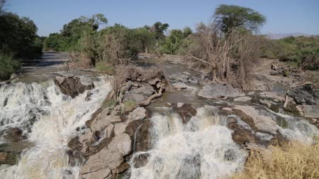 nílus : in ethiopia africa the awash national park and the falls nature wild Stock mozgókép