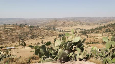 afrika : hill and landscape in the nature mountain near cactus