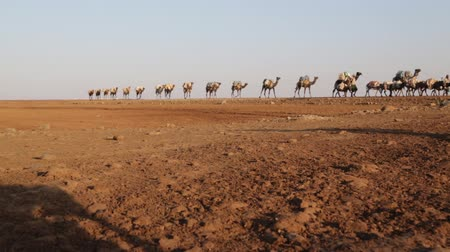 herder : the hill of salt and camels