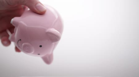 piggy bank : in the white background and copy space