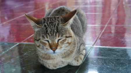 tabby cat : Sleeping cat