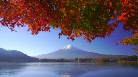 urlop : Mountain fuji with red maple in Autumn, Kawaguchiko Lake, Japan